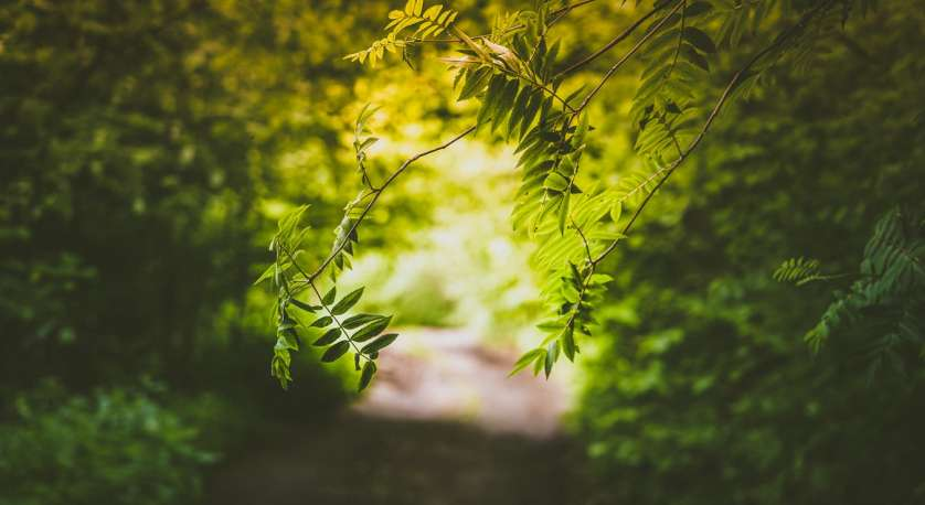 a bunch of green leaves and branches along dirt path