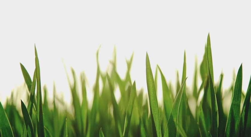 green grass with a sunset or sunrise in the background