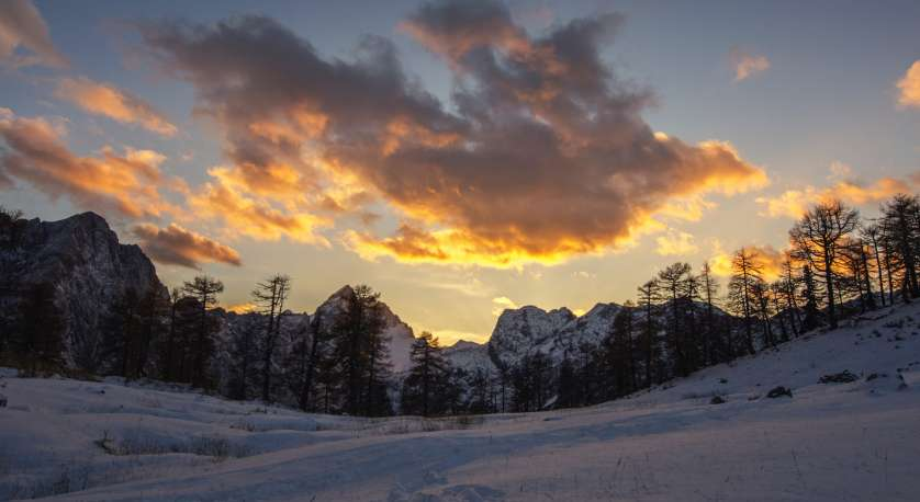sunset photo of evergreen tree line during winter with lots of snow