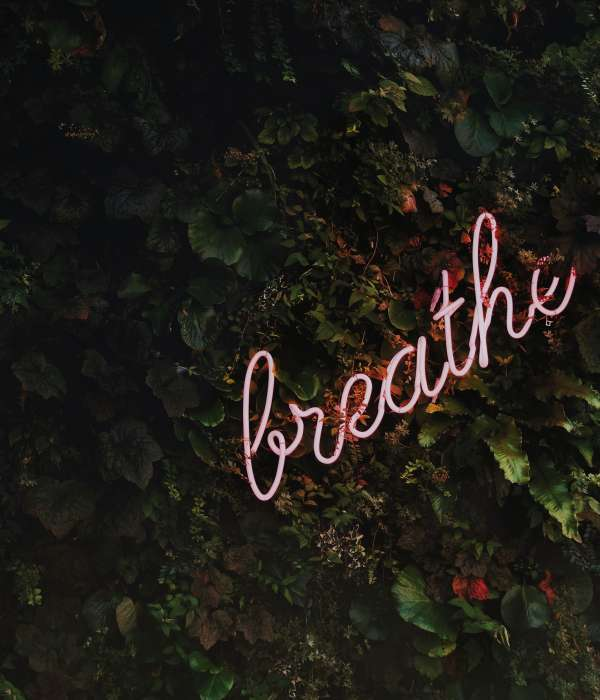 "pink neon sign that says ""breathe"" against some green foliage that looks like ivy"