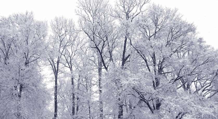 snowy trees outside Cedar Lane UU Church in winter
