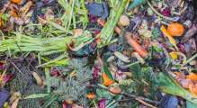 photo of a composting pile with a bunch of fruits and vegetables